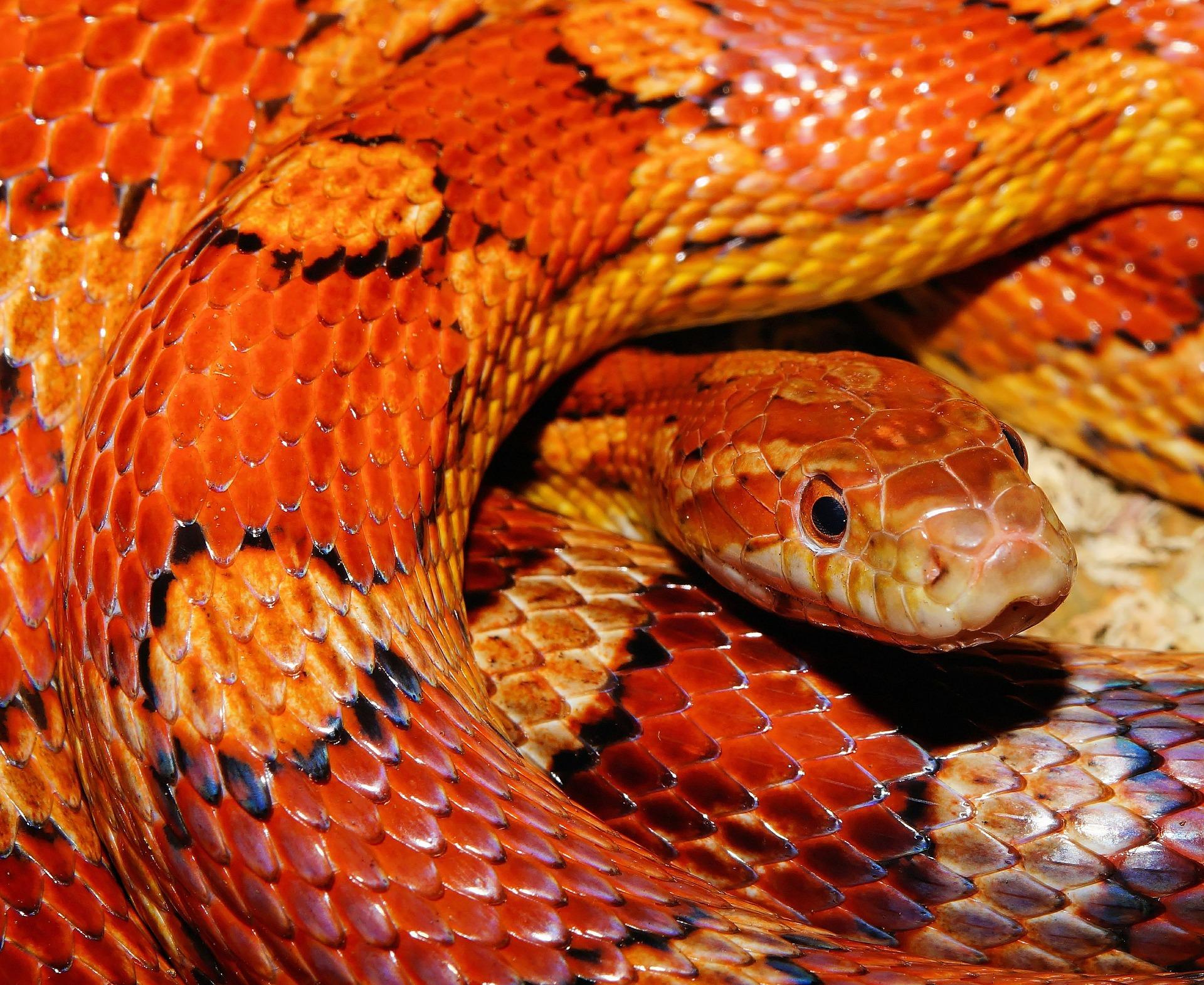 snake-579682_1920